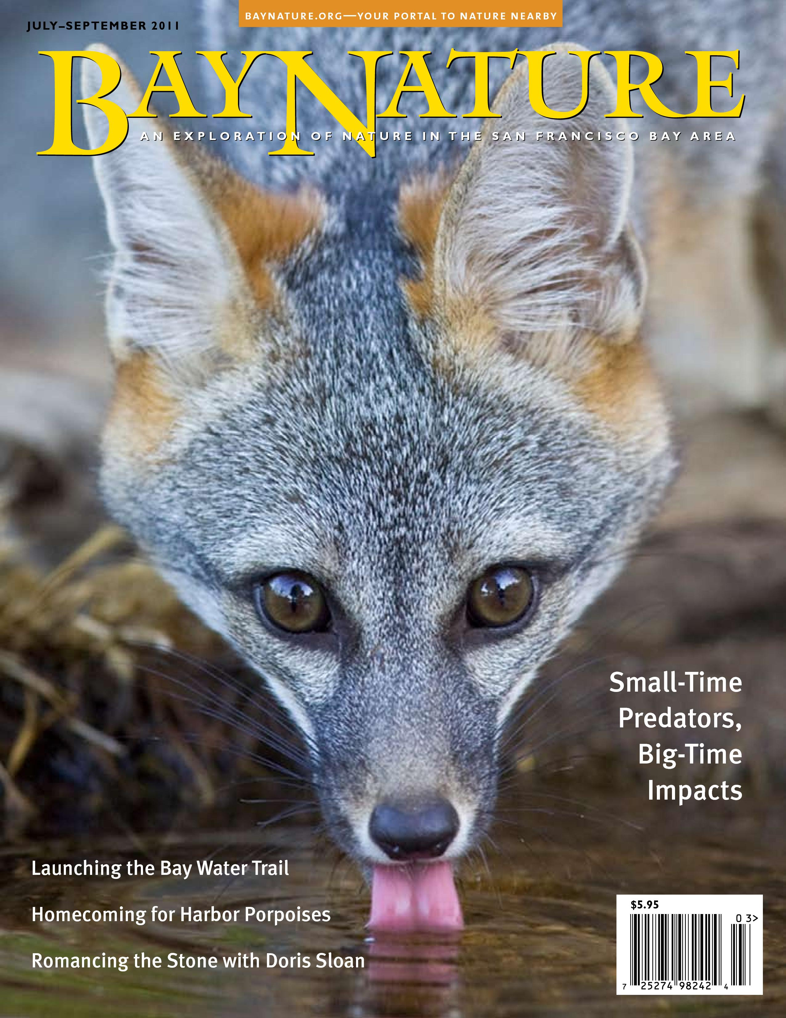 bay nature cover u2013 dream catcher images by bruce finocchio