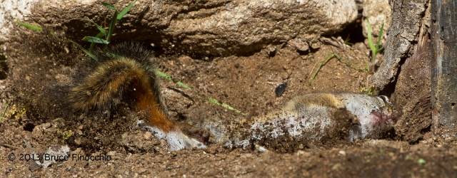 Ah, Rolling In The Dirt, Chipmunk Style