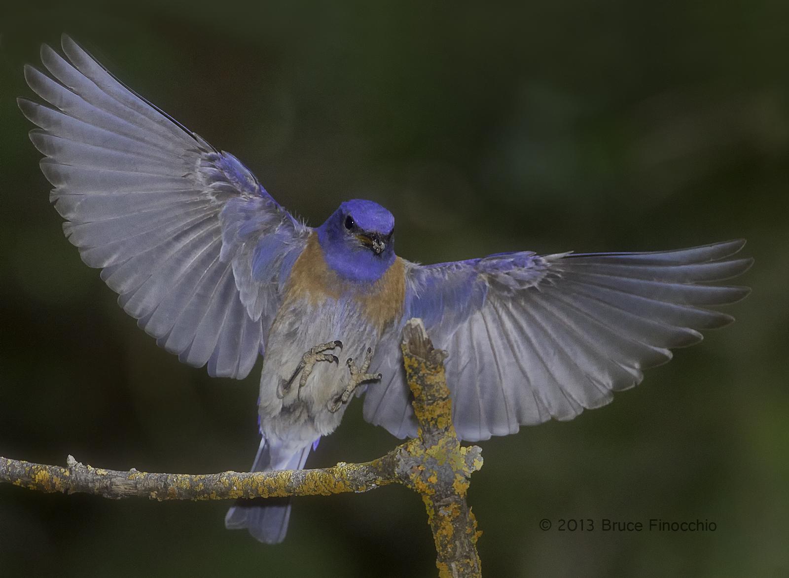 bird wings spread - HD1600×1172