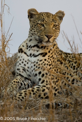 Maxabeni Portrait On Termite Mound