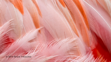 Flamingo Feather Patterns