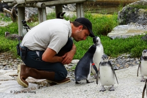 Zoo Keeper Has Conversation With His Penquins