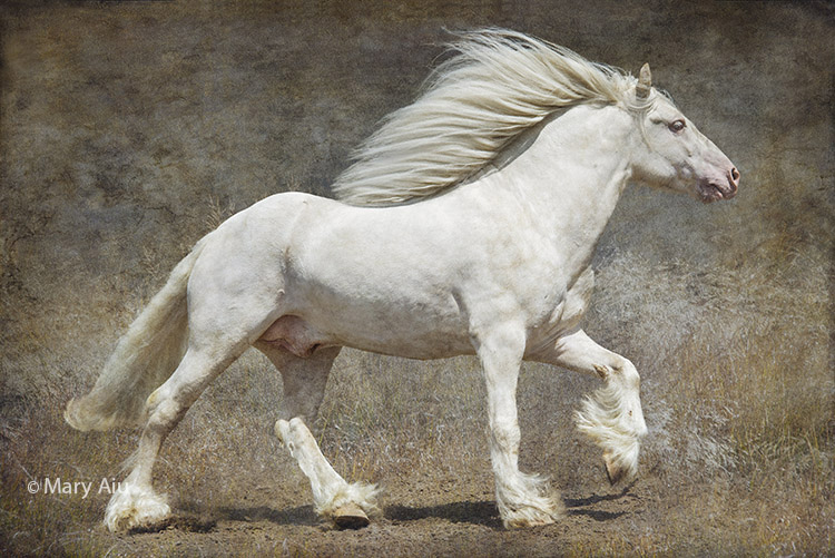 © 2016 Mary Aiu -- On The Run (Gypsy Horse)